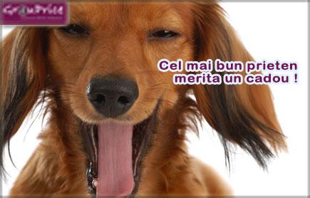 Pentru animalute Fericite PACHET - sanatatea si ingrijire: Deparazitare externa +Tuns Specific Rasei + Descalcit + Coafat + Toaleta Auriculara + Vidare Glande + Taiat Unghiute pentru animalul tau de companie