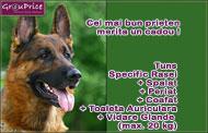 Tuns Specific Rasei + Periat + Coafat + Toaleta Auriculara + Vidare Glande + Taiat Unghiute  (max. 12 kg)